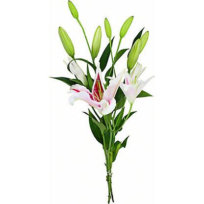 Central Market Starfighter Lilies, 3 Stem