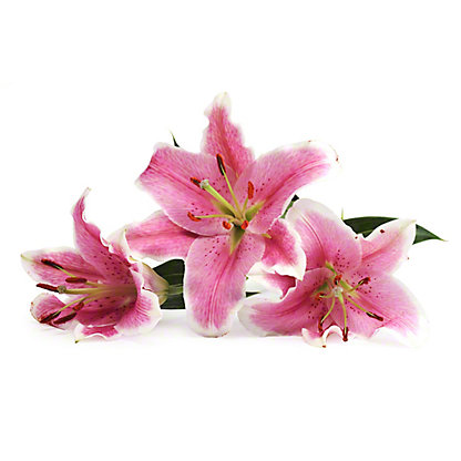 Central Market Oriental Lilies, 3-stem bunch