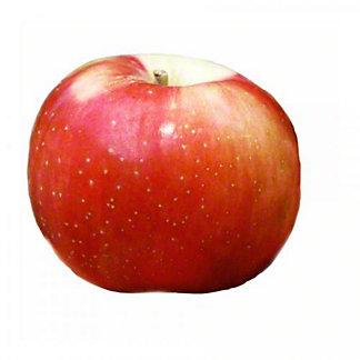 Fresh Zestar Apples