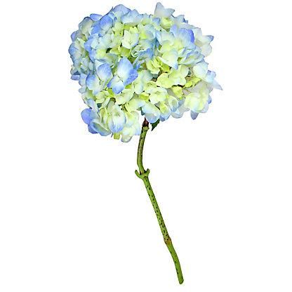 Extra Blue Hydrangea, ea
