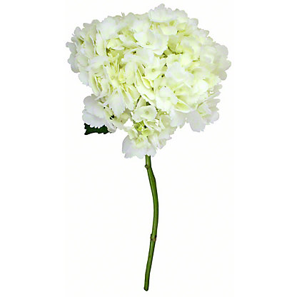 White Hydrangea, ea