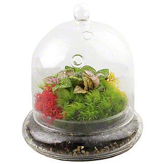 Small Glass Cloche Terrarium, ea