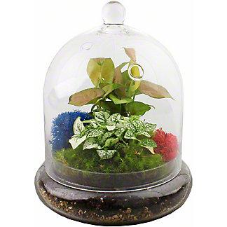 Medium Glass Cloche Terrarium, ea