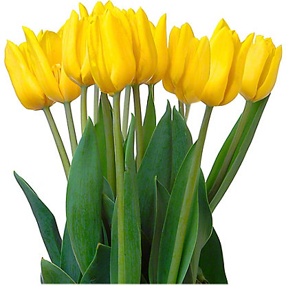Central Market Novelty Tulips, 15 Stem Bunch