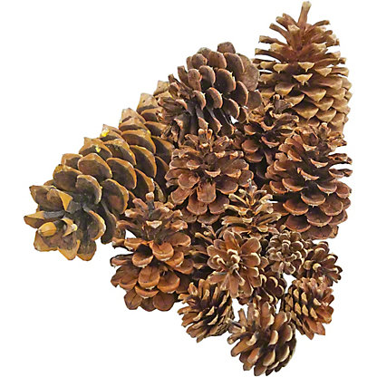 Mixed Pine Cone Assortment, EACH