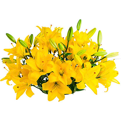 Central Market Royal Lily, 10 Stem