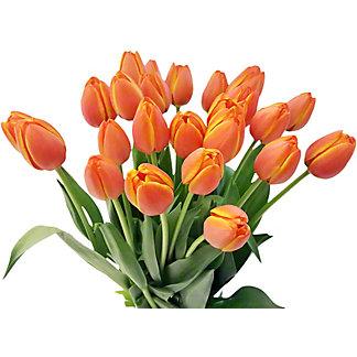 25-Stem Tulips, Bunch
