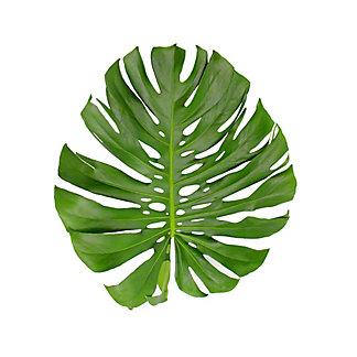 Medium Monstera Leaf, ea