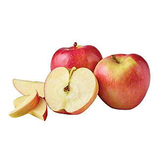 Wild Twist Apple