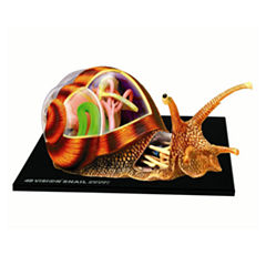 4D Master 4D Vision Snail Anatomy Model