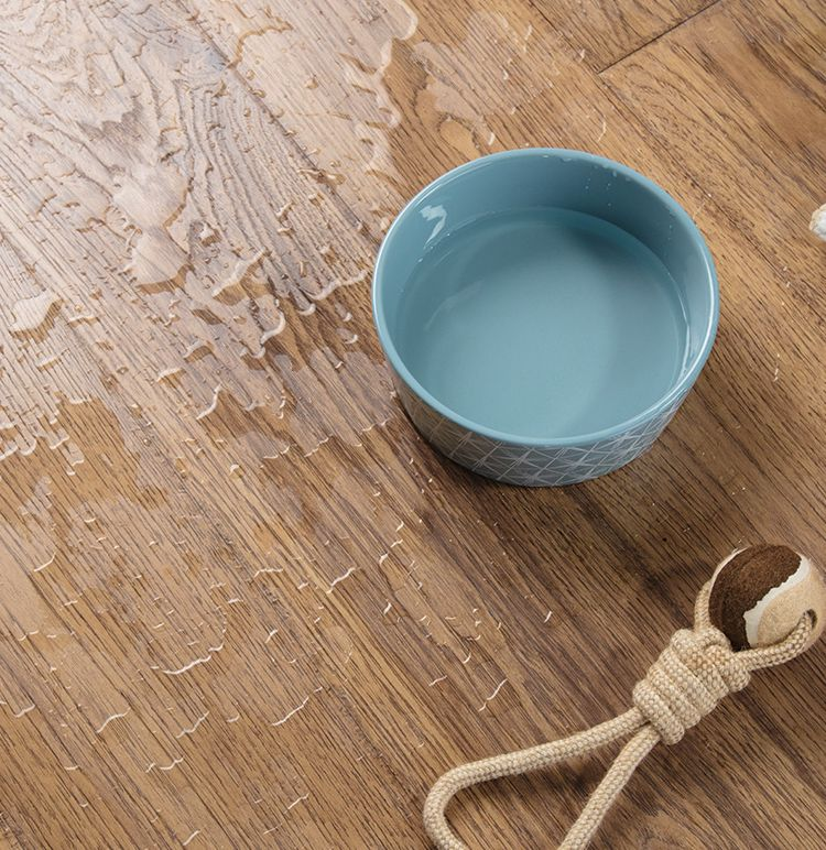 Wood Flooring Covered With Water And A Blue Water Bowl Surrounded By Pet Toys