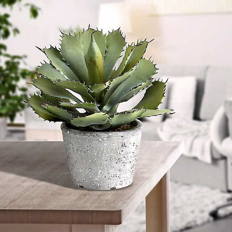 Artificial Succulents 25% Off with code: COZY