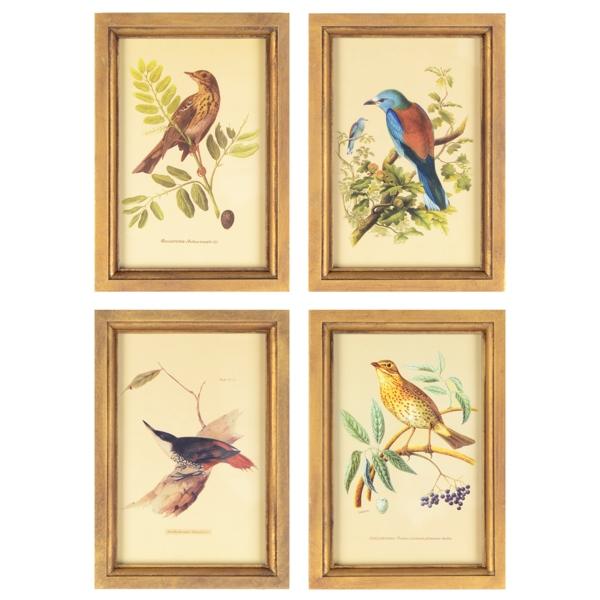 Birds Framed Art Print, Set of 4   Kirklands