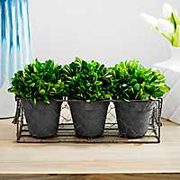 4-Piece Boxwood Topiary Arrangement