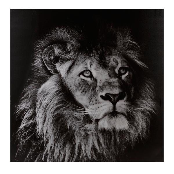 Portrait of a lion canvas art print