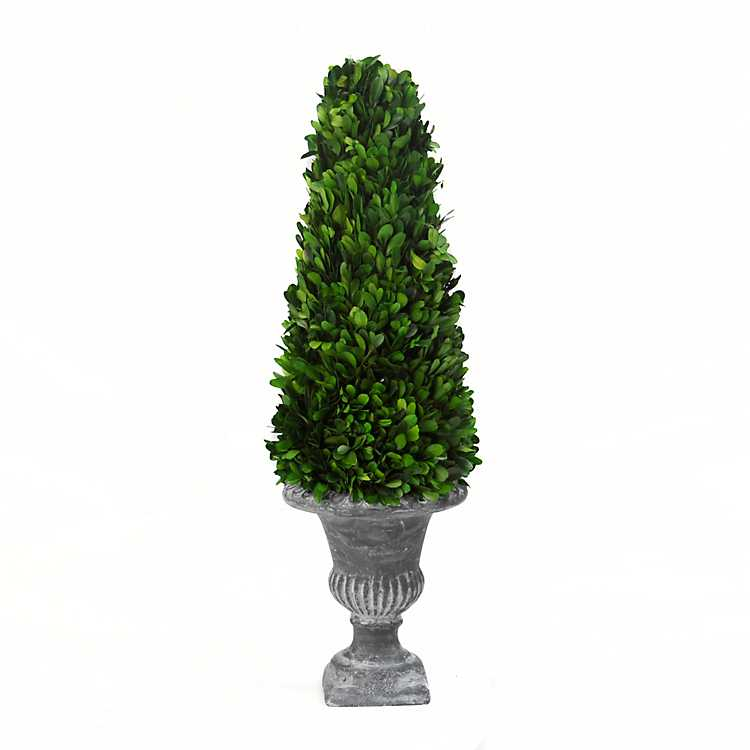 Preserved Boxwood Cone Topiary 19 In Kirklands