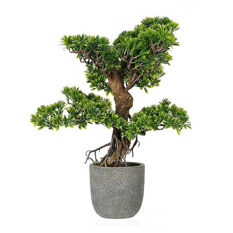 Potted Bonsai Tree Kirklands