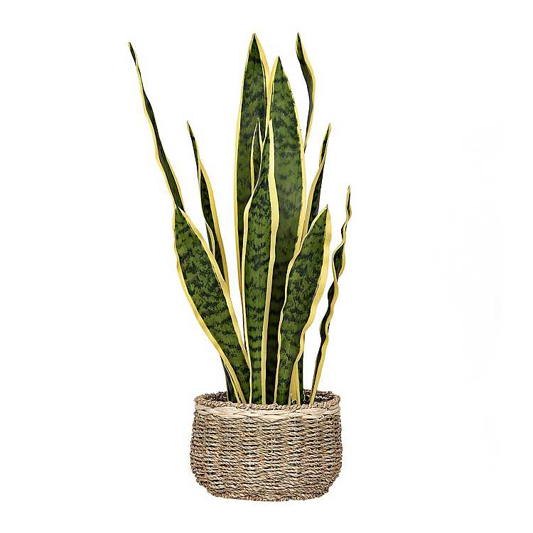 woven seagrass baskets with handles decorative storage boxes.htm snake plant in woven basket kirklands  snake plant in woven basket kirklands