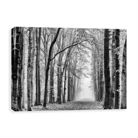 Black and white forest canvas art print