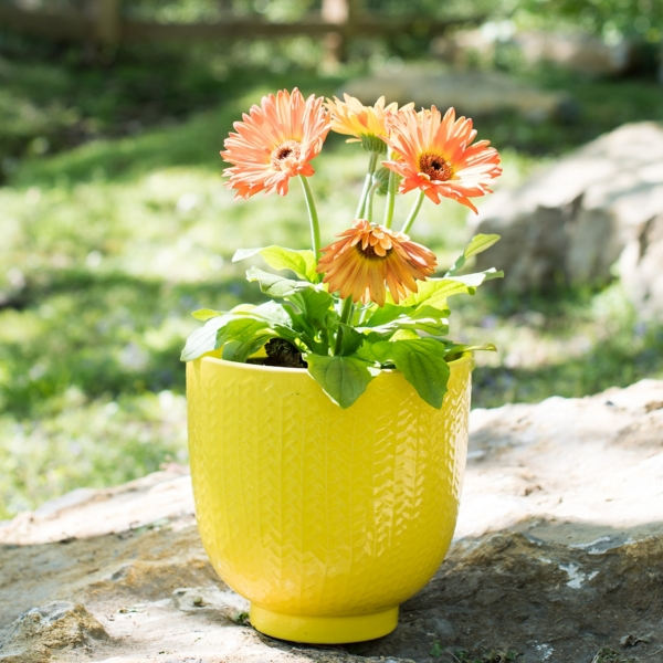 Yellow Feathers Ceramic Planter