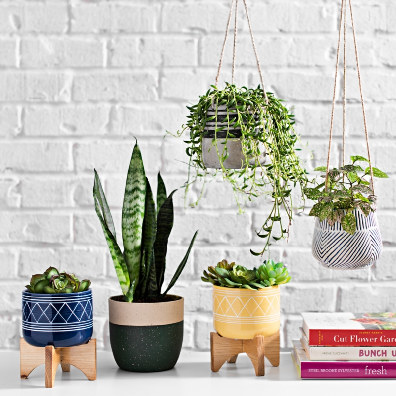 A pot for every plant