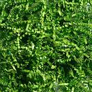 Lime Green Iridescent Shredded Paper