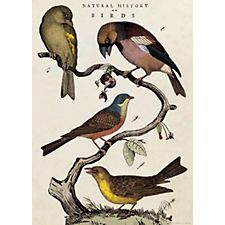 Cavallini Natural History Birds Wrapping Paper