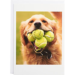 Retriever with Tennis Balls Birthday Card