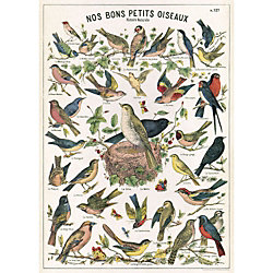 Cavallini Bird Chart Wrapping Paper