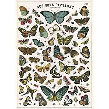 Cavallini Butterfly Chart Wrapping Paper