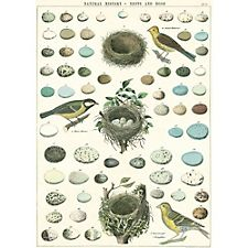 Cavallini Birds, Nest & Eggs Wrapping Paper