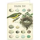 Cavallini Nest & Eggs Thank You Card
