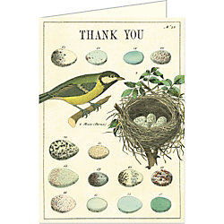 Cavallini Nest & Eggs Thank You Card