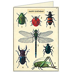 Cavallini Insects Birthday Card