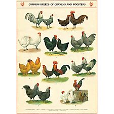 Cavallini Chickens & Roosters Wrapping Paper