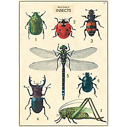Cavallini Insects Wrapping Paper