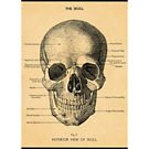 Cavallini The Skull Wrapping Paper