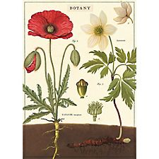 Cavallini Botany Wrapping Paper