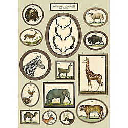 Cavallini Natural History Animals Wrapping Paper