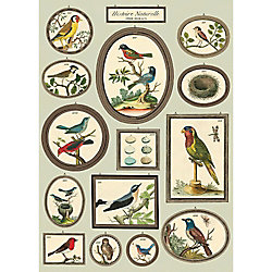 Cavallini Birds Natural History Wrapping Paper
