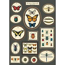 Cavallini Natural History Butterfly And Insects 2 Wrapping Paper