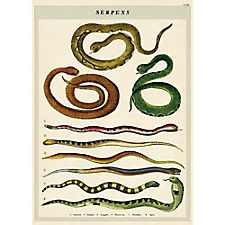 Cavallini Serpents Wrapping Paper