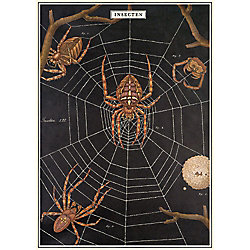 Cavallini Spider Chart Wrapping Paper