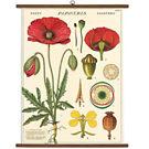 Cavallini Botany Vintage School Chart