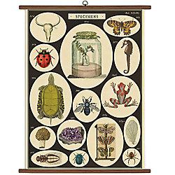 Cavallini Specimens Vintage School Chart - 40