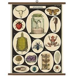 Specimens Vintage School Chart