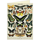 Cavallini Butterflies Greeting Card