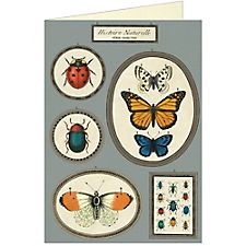 Cavallini Natural History Insects Greeting Card
