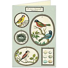 Cavallini Natural History Birds Greeting Card