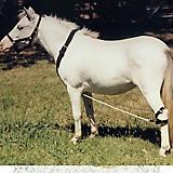 Weavers Tack Mini/Pony Nylon Breeding Hobbles